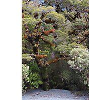Fiordland 4 Photographic Print