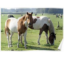 Two beautiful colorful horses with cows on the background Poster