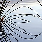 Reflection - Lake Curlew, NSW by Gregory McInnes