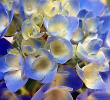 Heavenly Blues by RC deWinter