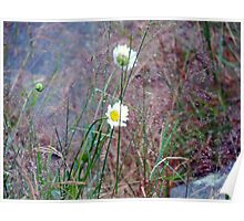 Wild Flowers and Grasses Poster