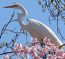 Egret at Holmdel Park by Joanne7111