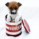 Sugar Belle by micklyn