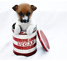 Sugar Belle Photographic Print