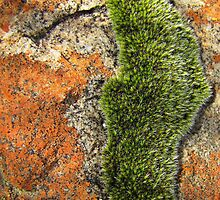 Moss on a sandstone rock by Lee Jones