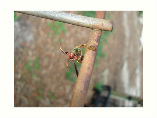 Wasp with Prey by May Lattanzio