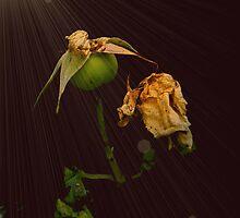 Landoras - Deadly Kiss by Gilberte