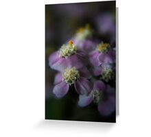 Today I am beauty  (from wild flowers collection) Greeting Card