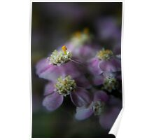 Today I am beauty  (from wild flowers collection) Poster