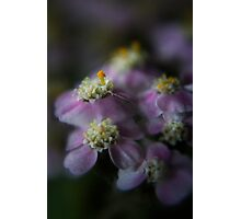 Today I am beauty  (from wild flowers collection) Photographic Print