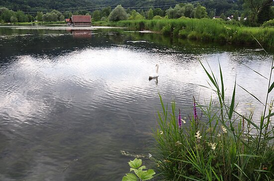 Edge of Lake with Swan by Daidalos