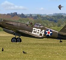Warhawk with Magpies by Colin Smedley