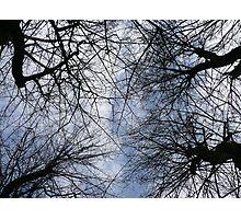 Converging Trees Photographic Print
