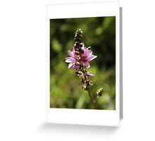 Wild flower from the High Sierra Greeting Card