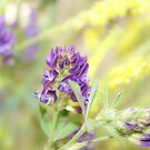 Purple Clovers by Jena Ferguson