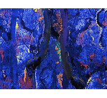 Abstract Trees, Moss and Branches in Blues With Accents of Other Colors Photographic Print