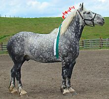 Show Grey Percheron by Al Bourassa