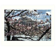 Cherry Blossoms - Jefferson Memorial Art Print
