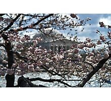 Cherry Blossoms - Jefferson Memorial Photographic Print