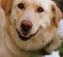 Roxy smiling by jillndon4807