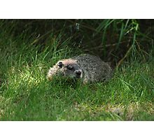 Hello Mr GroundHog Photographic Print