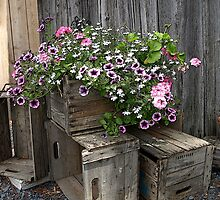 Flower Box by marchello