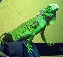 Trogdor the Green Iguana by iguanababe221