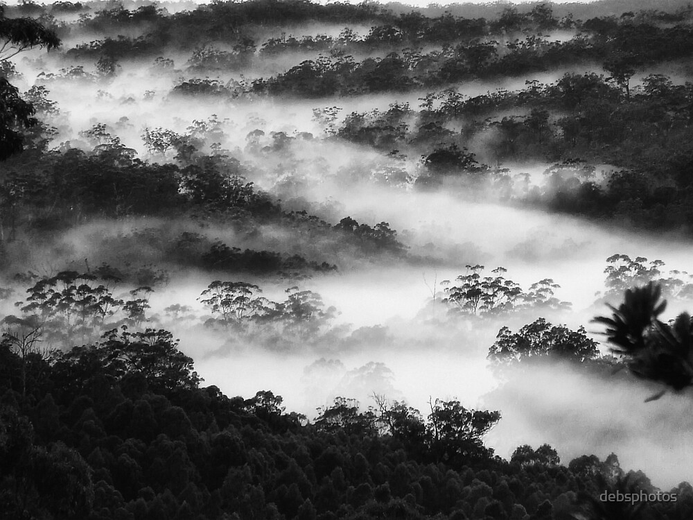 """""""Foggy Bliss' by debsphotos"""