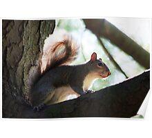 Burt's Squirrel Poster