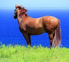 Pegasus by Brian Carey