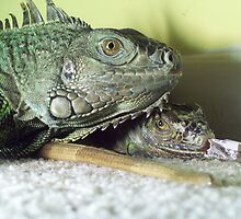 IGUANAS IN LOVE by iguanababe221