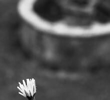 Solitude by JantraK