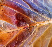 Winter Leaf II by David Lamb