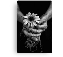 Elder Roots Canvas Print