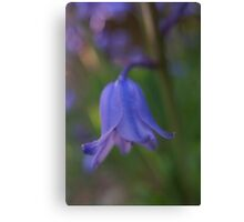 Bluebell macro Canvas Print