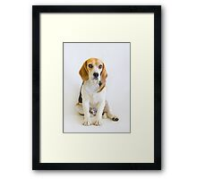 The Judge - Animal Rescue Beagle Portrait Framed Print