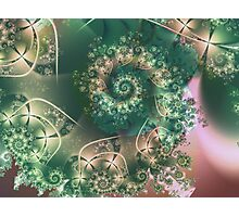 Spiral of Life Photographic Print