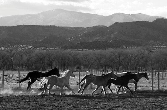 Herd on the Run by BarneyB