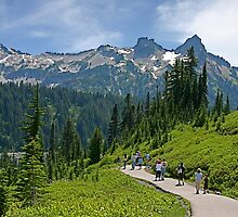Tatoosh Range from Paradise, Mt. Rainier by Barb White