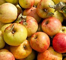Apples by Jaime Pharr