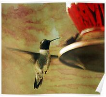 Black Chinned Hummingbird at Feeder Poster