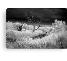 Barrabool River and stormclouds Canvas Print