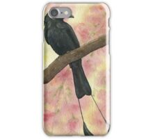 Racket-tailed Drongo iPhone Case/Skin