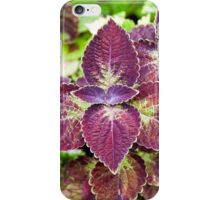 Coleus – Solenostemon scutellarioides iPhone Case/Skin