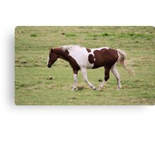 Colored horse Canvas Print