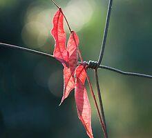 Man and Nature by Ann  Palframan