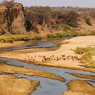 Nature,Wildlife,Lanscape-capture - The Letaba River, &quot;KRUGER NATIONAL PARK&quot; ,SOUTH AFRICA by Magaret Meintjes