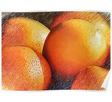 Oranges In Pencil Poster