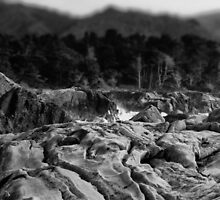point lobos by dennis william gaylor