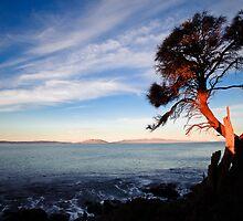 Sunlit Tree by Kana Photography
